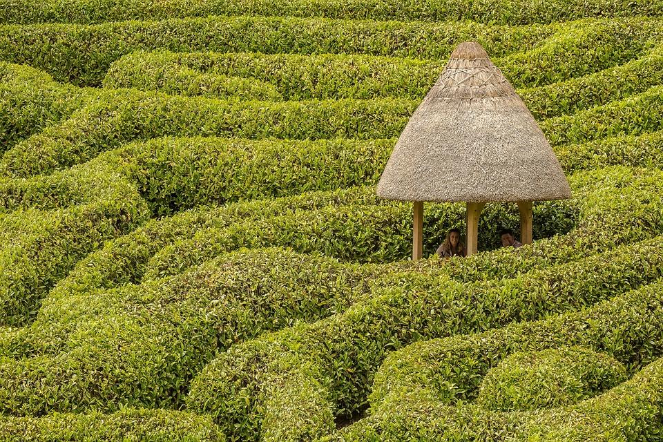 Maze, Glendurgan, Hedge, Hut, Garden, Cornwall, Pattern