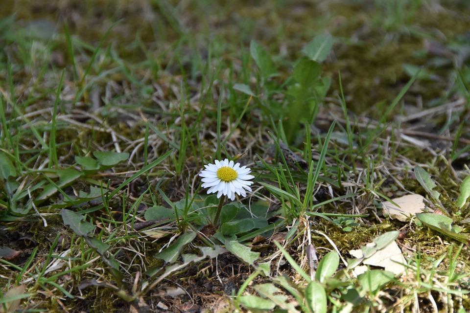 Nature, Grass, Flora, Summer, Outdoors, Flower, Garden
