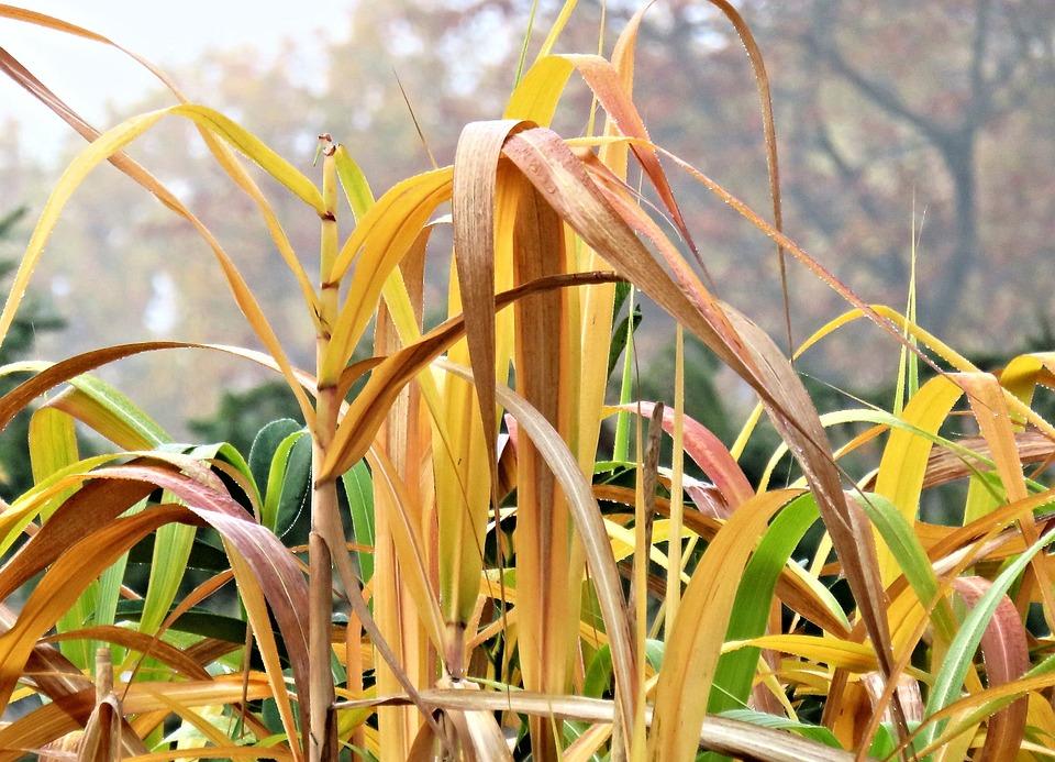 Autumn, Grasses, Bamboo, Garden, Fog, Bamboo Leaves