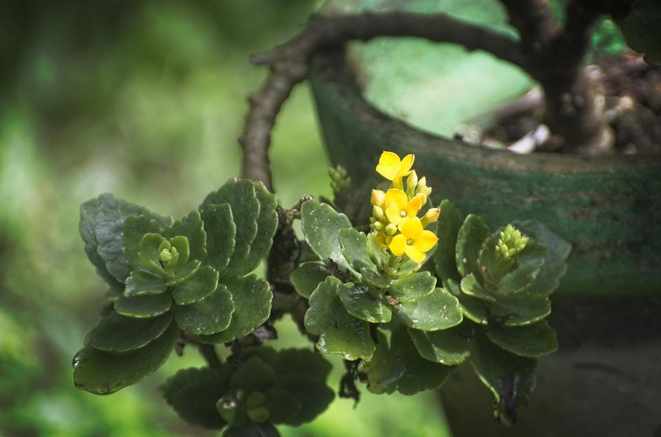 Plant, Flower, Green, Yellow, Colorful, Summer, Garden