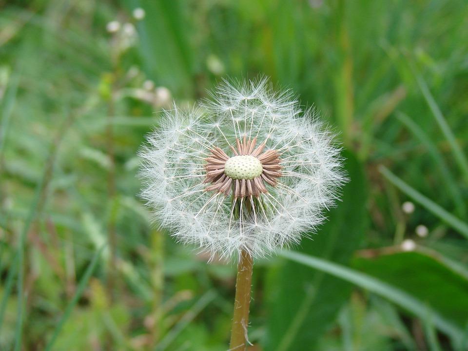 Flower, Green, Plant, Nature, Natural, Floral, Garden