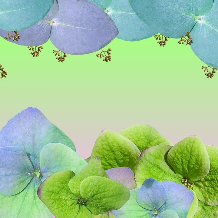 Flowers, Hydrangea, Branches, Garden