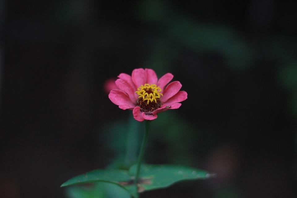 Flowers, Garden, Indonesia, Flora