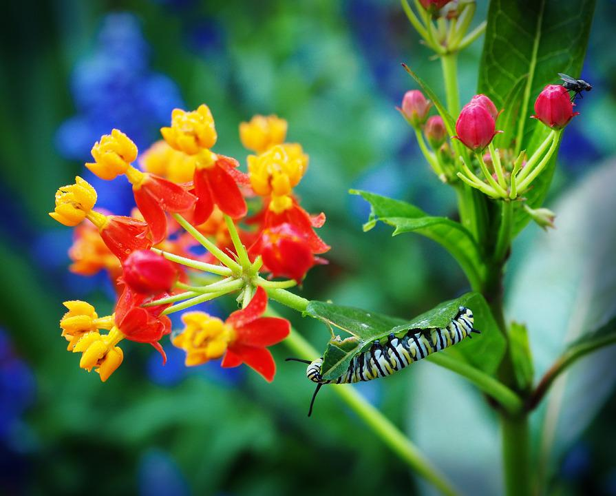 Flower, Nature, Outdoors, Garden, Flora, Summer, Insect