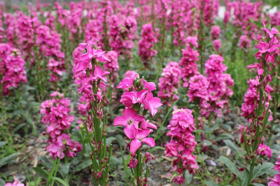 Flower, Into Different Colors, Parterre, Garden