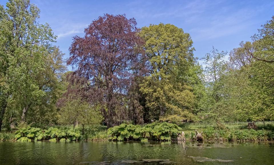 Syon Park, Trees, Garden, Park, Syon, London, Lake
