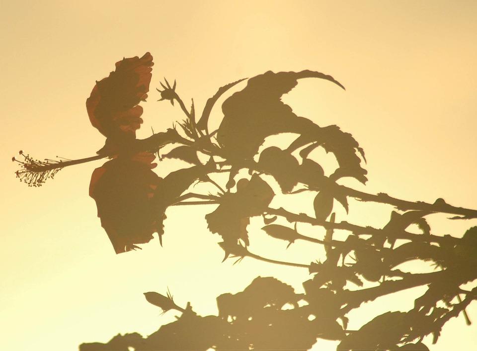 Flower, Leaf, Landscape, Green, Garden, Nature, Flowers