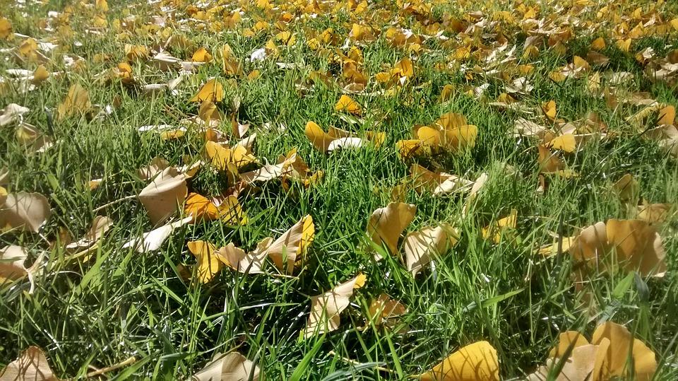 Leaf Litter, Autumn, Garden, Landscape, Nature, Park