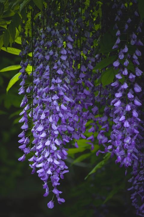 Purple, Garden, Green, Summer, Plant, Lavender