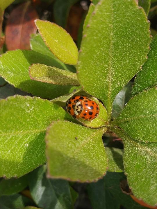 Leaf, Nature, Flora, Insect, Closeup, Garden, Outdoors