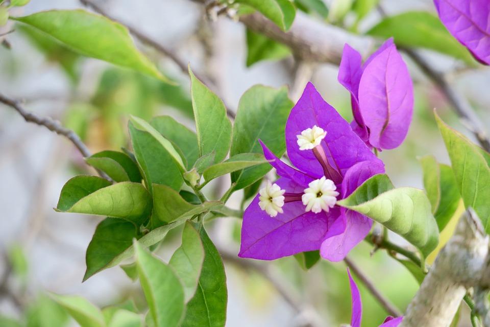 Nature, Leaf, Plant, Flower, Branch, Garden, Outdoor