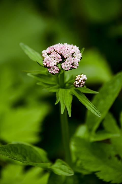 Macro, Plant, Nature, Flower, Close-up, Garden, Letter