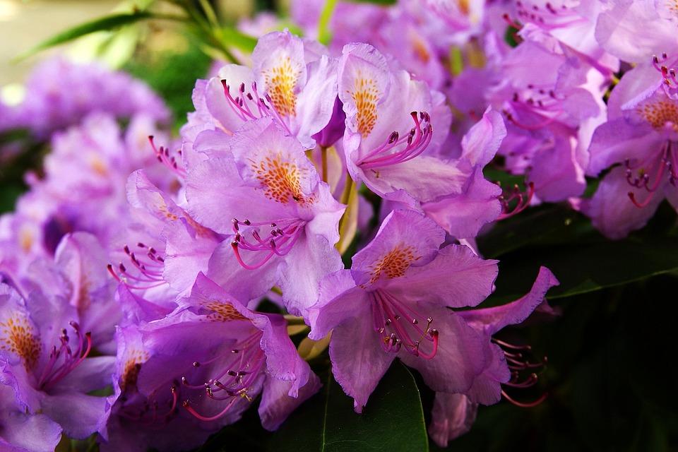 Flower, Garden, Flowers, Beauty, Macro, Nature, Flora