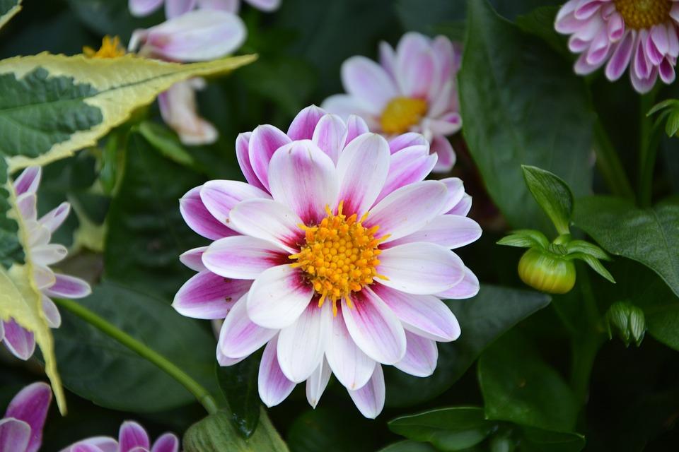 Flower, Marguerite, Bouquet, Massive Nature, Garden