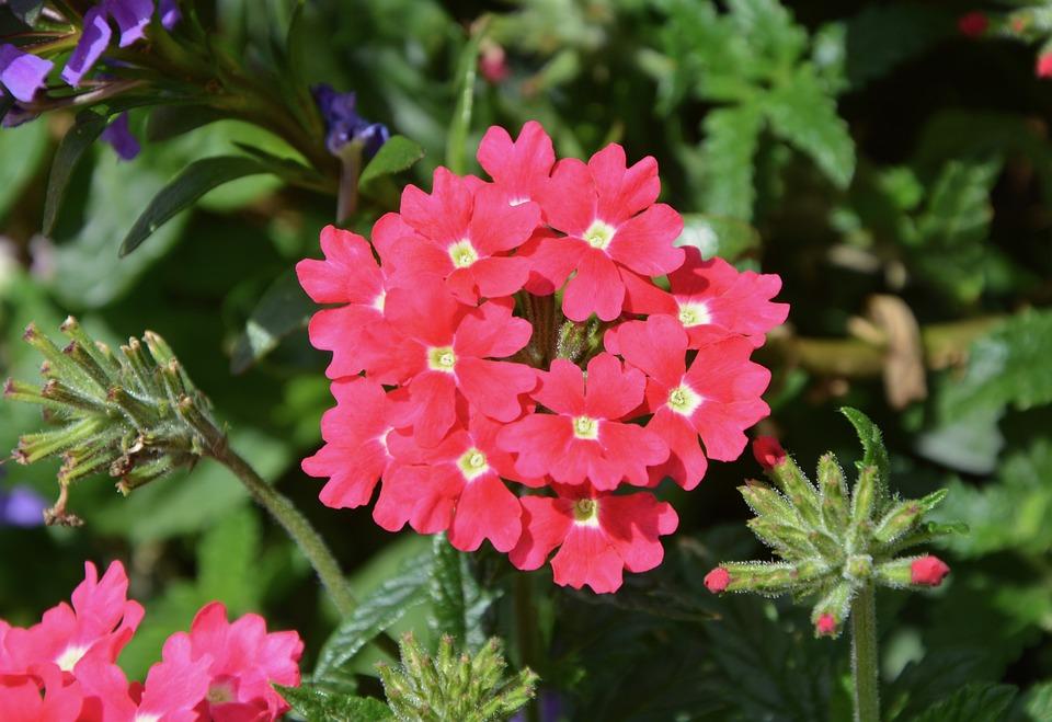 Flower, Massif, Parterre, Nature, Garden