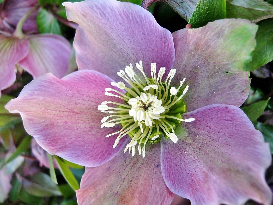 Flower, Plant, Garden, Nature, Blossom, Bloom