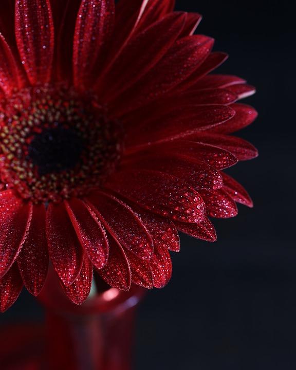 Flower, Plant, Petal, Color, Nature, Garden, Lovely