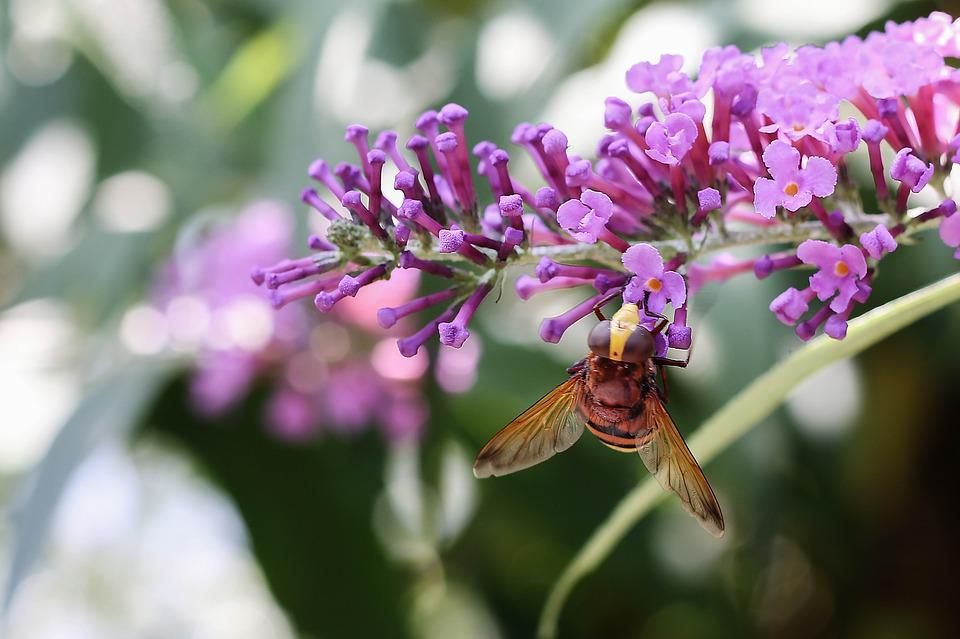 Wasp, Insect, Nature, Garden, Flower