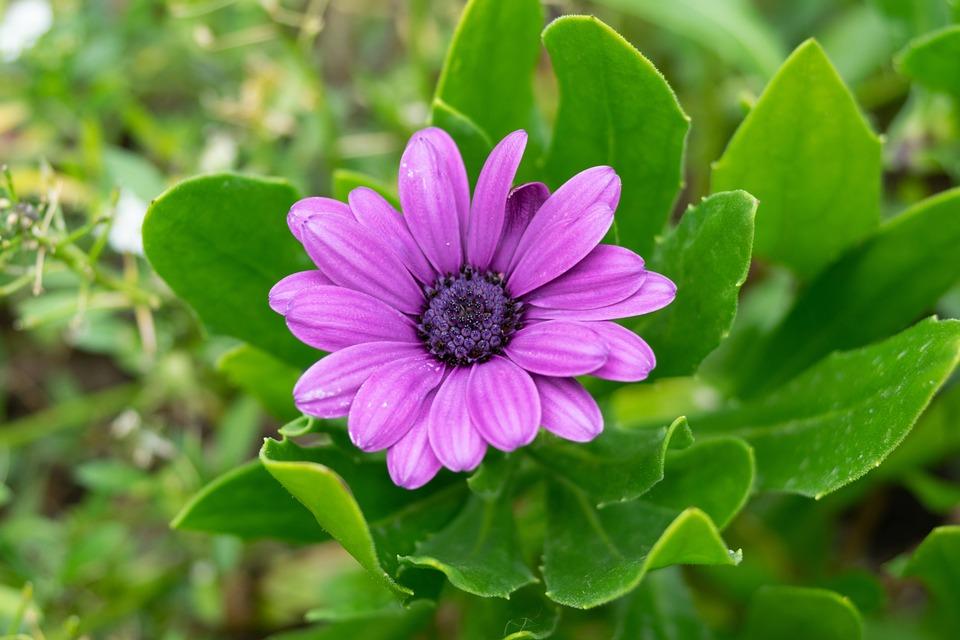 Flower, Macro, Nature, Garden