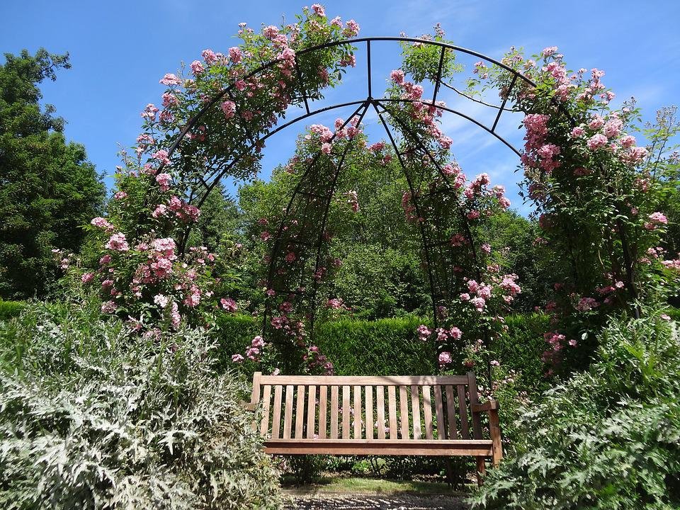 Roses, Garden, Flower, Nature, Pink Flowers