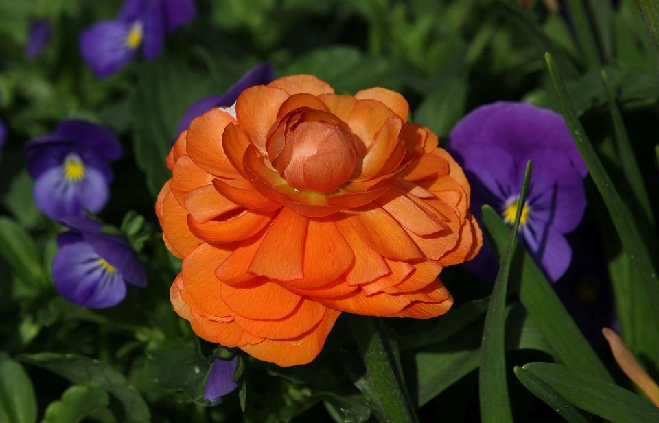 Flower, Plant, Garden, Nature, Orange, Close Up