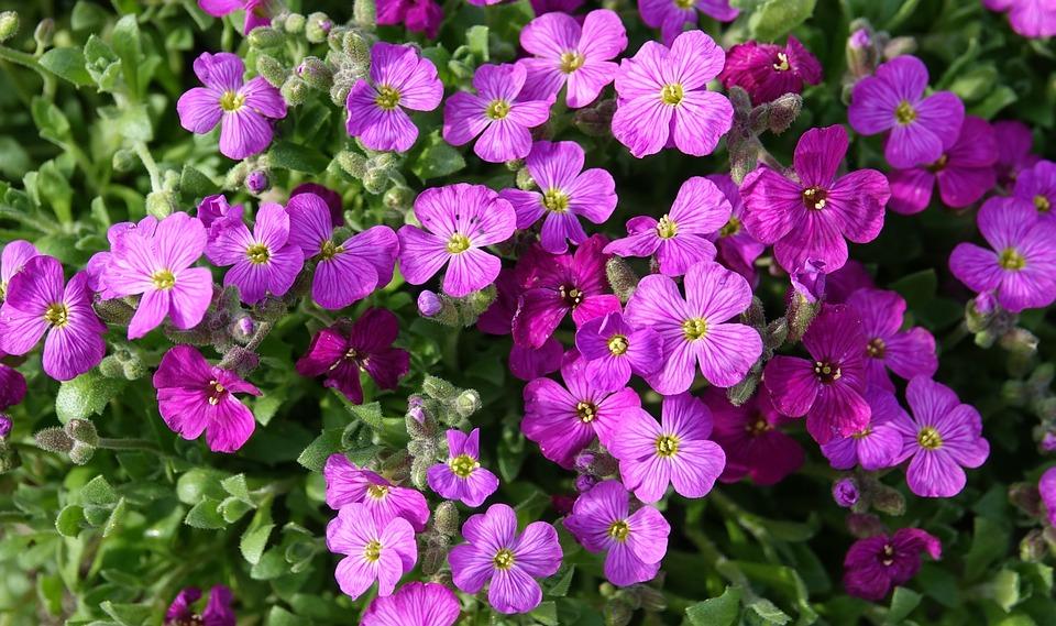Flower, Flowers, Garden, Nature, Fulfillment