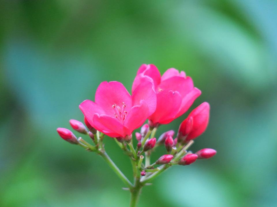 Flower, Nature, Plant, Flowers, Garden, Grassland