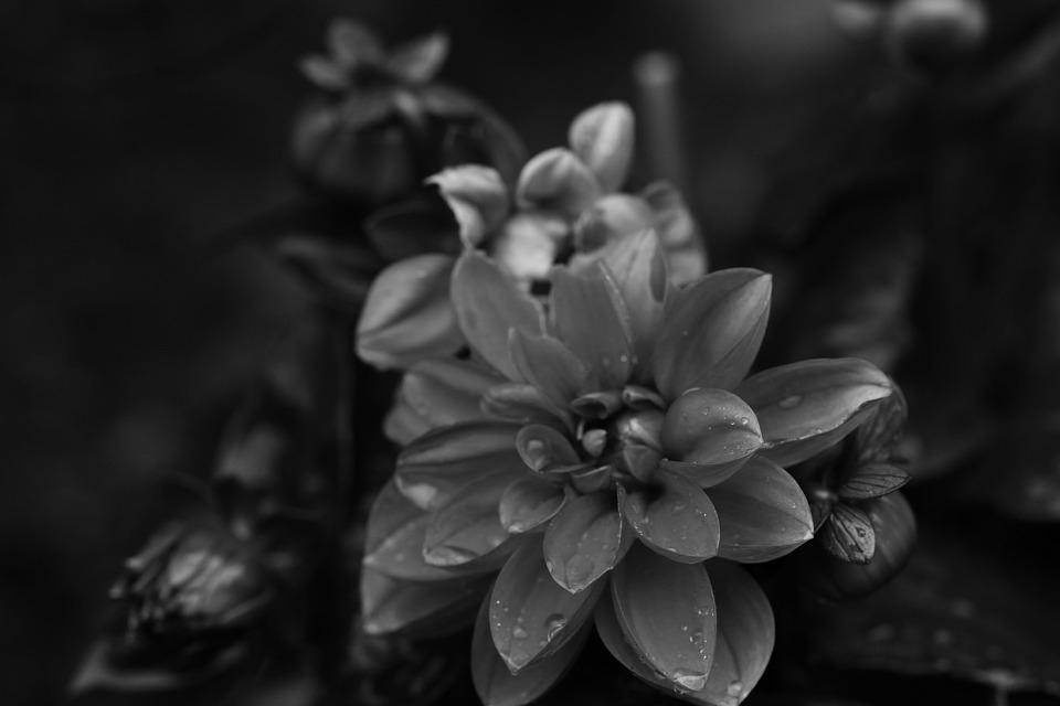 Flowers, Summer Flowers, Garden, Nature