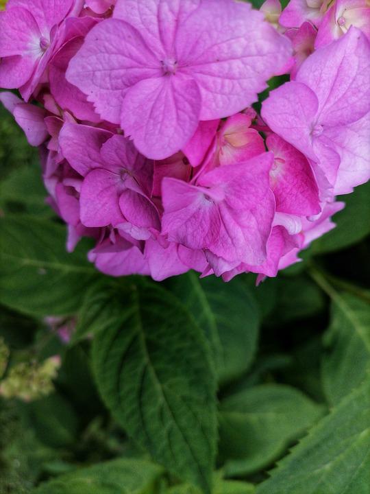 Summer, Flowers, Nature, Garden, Garden Flowers
