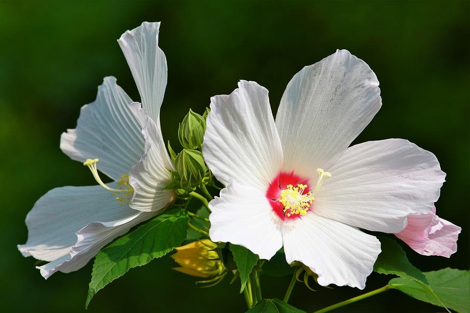 Butterfly, Flower, Insect, Nature, Grass, Garden, Green