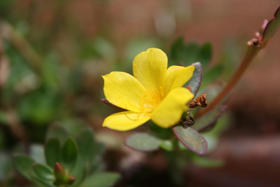 Nature, Plant, Flower, Leaf, Garden, Petal, Color