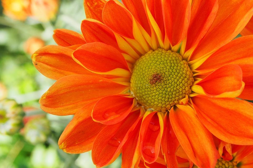 Flowers, Garden, Nature, Leaves, Flower
