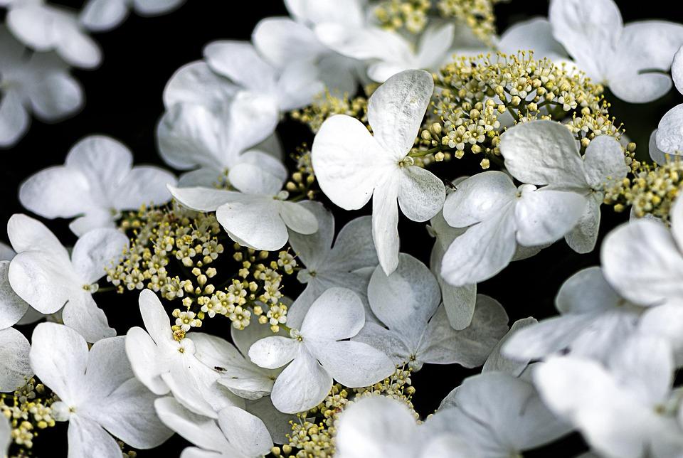 Flower, Plant, White, Garden, Nature