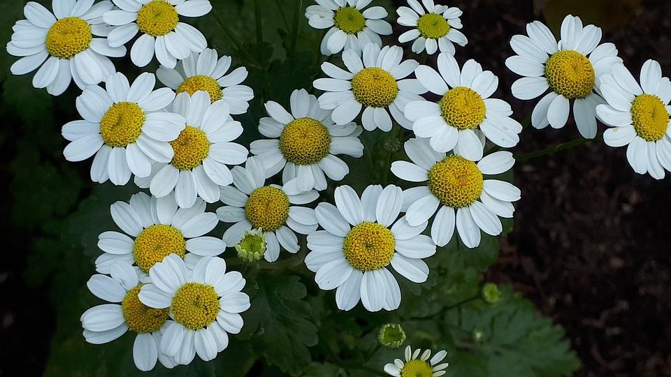 Flower, Nature, Garden, Plant, Summer, Spring, Petals
