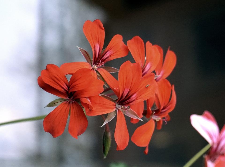 Flowers, Red, Nature, Garden, Warmth, Red Flower
