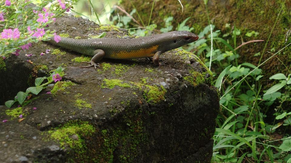 Nature, Reptile, Garden