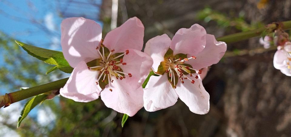 Flower, Spring, Tree, Garden, Plant, Nature, Pink