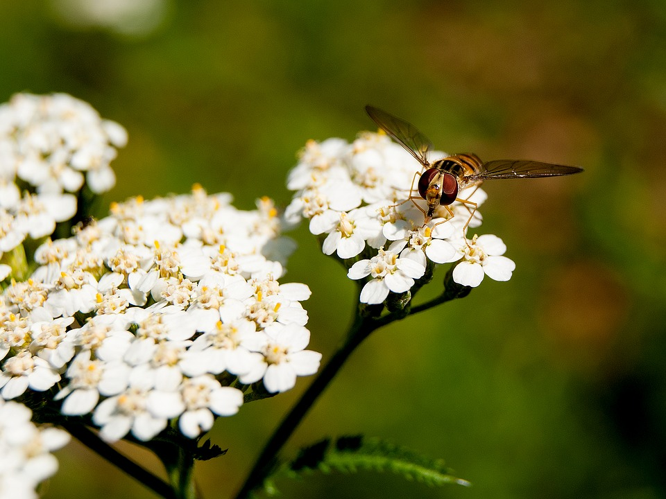 Flower, Wasp, Insect, Summer, Close Up, Garden, Nature