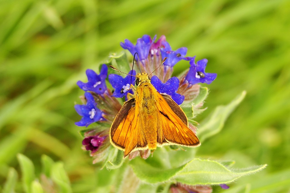 Nature, Flower, Plant, Garden, Summer, Animals, Insects