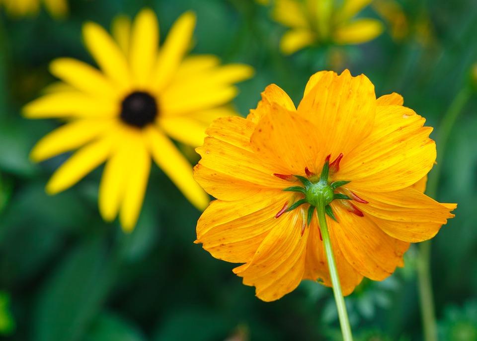 Flowers, Yellow, Yellow Flower, Garden, Nature