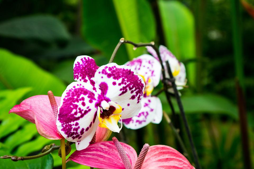 Orchids, Flower, Flowers, Garden, Orchid, Nature