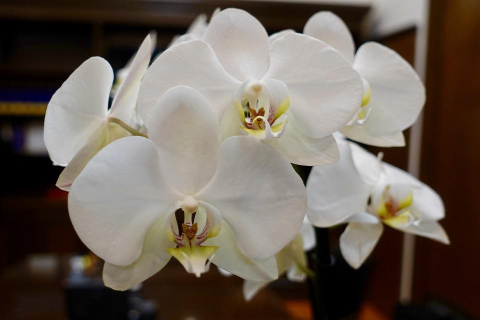 Flowers, Orchids, Nature, Spring, Garden, Love