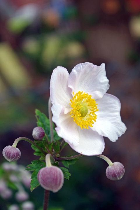 Flower Garden, Pentecost, Peony, Garden, Flower