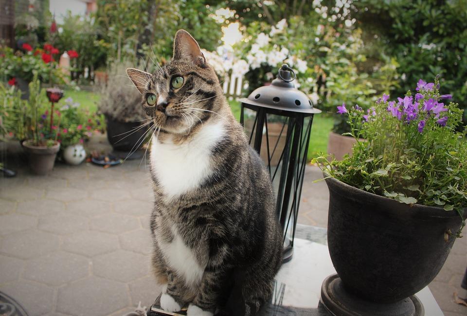 Cat, Pet, Garden, Park
