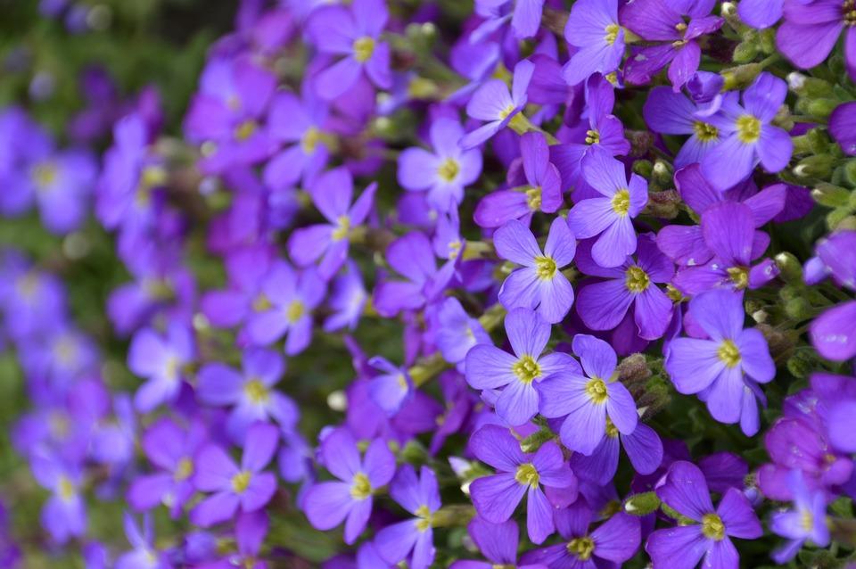 Flower, Plant, Nature, Garden, No Person, Petal, Summer