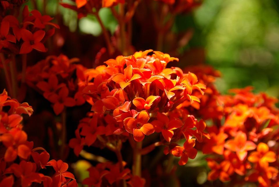 Flowers, Red, Garden, Petals