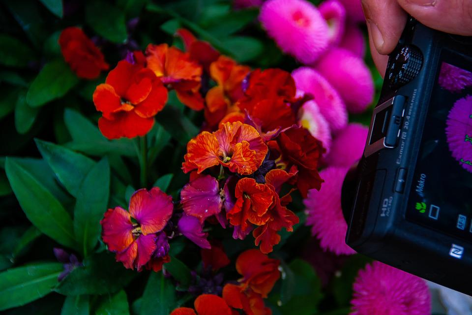 Flower, Picture, Photo, Camera, Screen, Plants, Garden