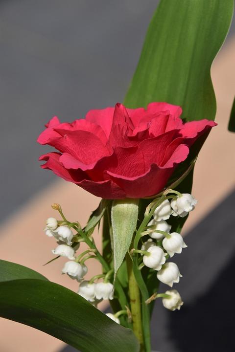 Flower, Plant, Pink, Thrush, Nature, Garden
