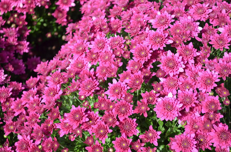 Pink, Flowers, Spring, Garden, Colorful, Floral