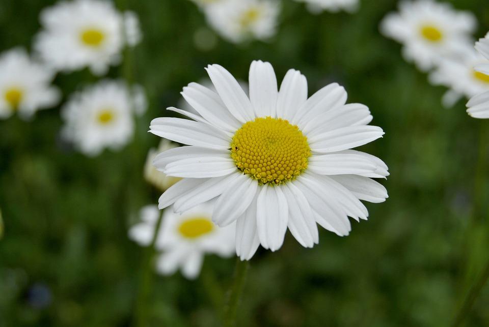 Flower, Nature, Plant, Summer, Garden, Floral, Petal